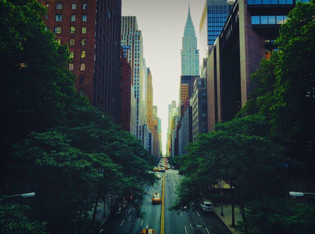 New York Tree