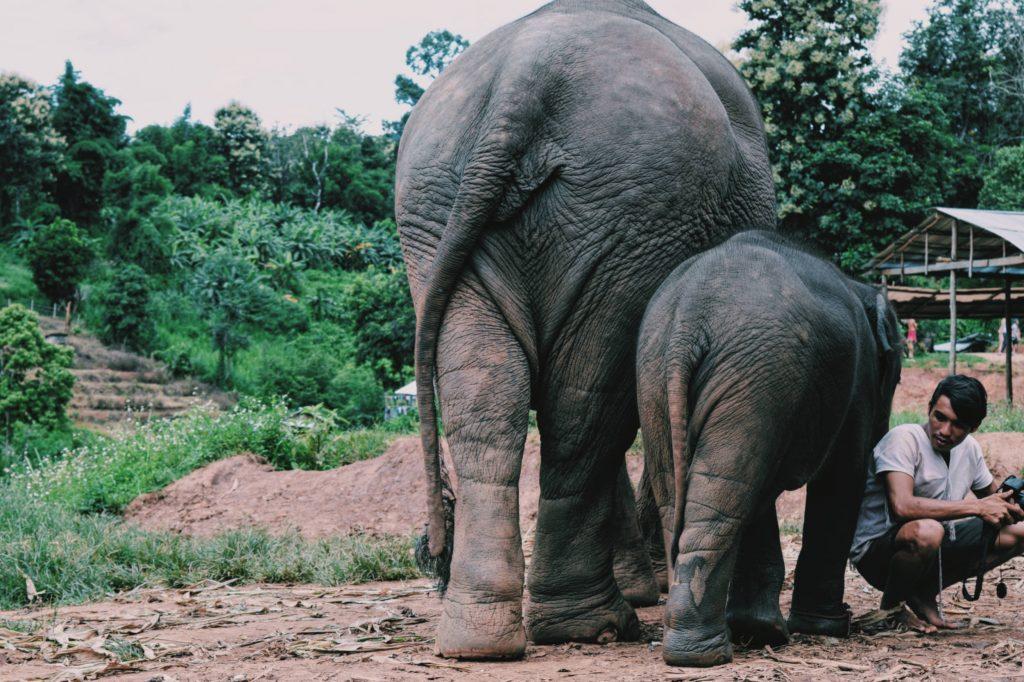 elefanti nel villaggio karen