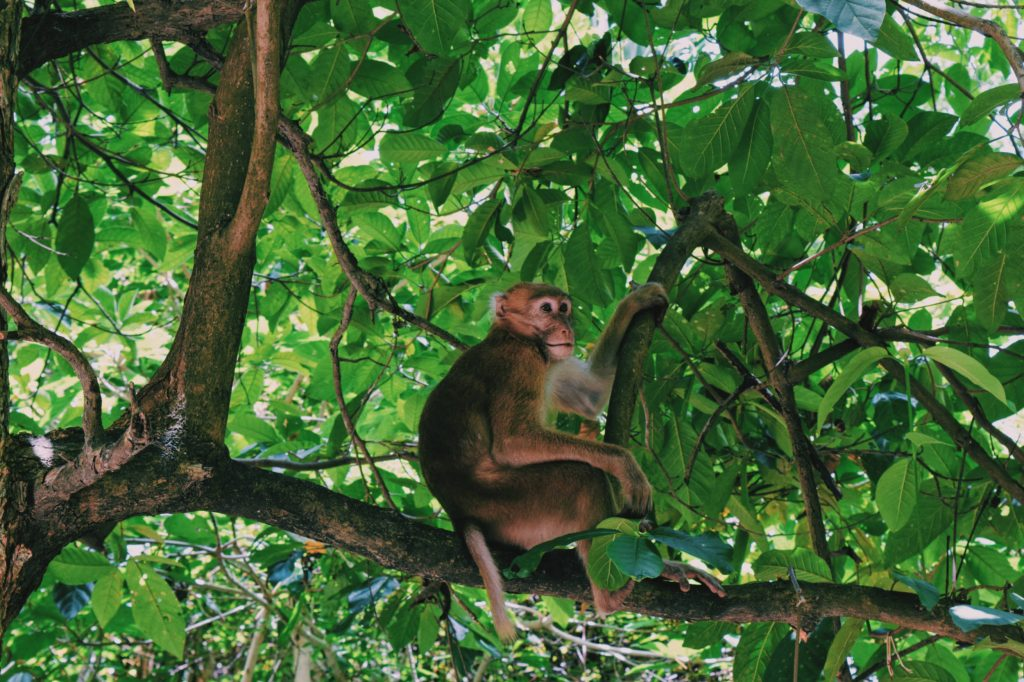 scimmia parco erawan