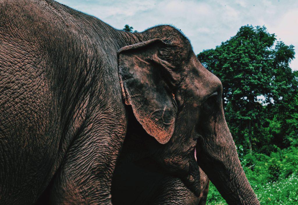 elefanti villaggio karen